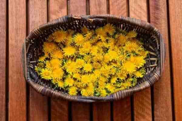 Рецепт варенья из цветков одуванчика