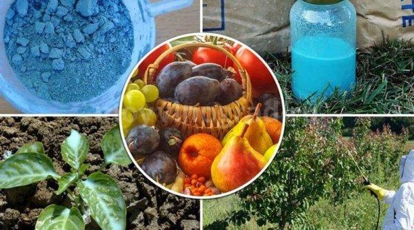 Медный купорос: применение в садоводстве, описание