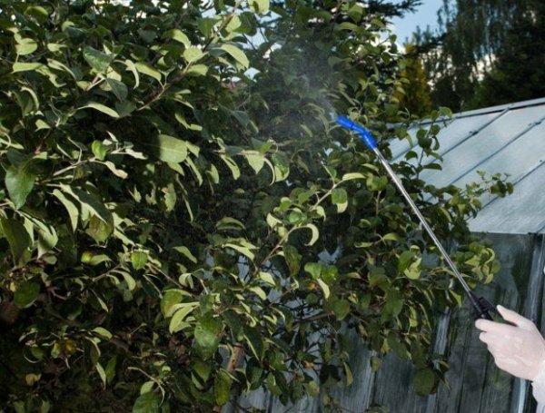 Медный купорос: обработка деревьев