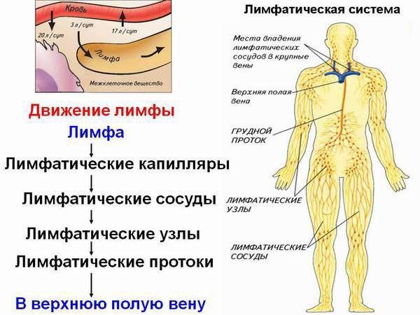 Лимфодренажный массаж: что это такое