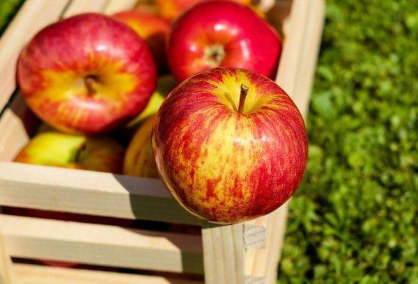 Яблочный спас 2021: года дата