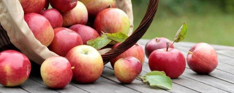 Яблочный спас 2021 года: какого числа будет, традиции и обряды