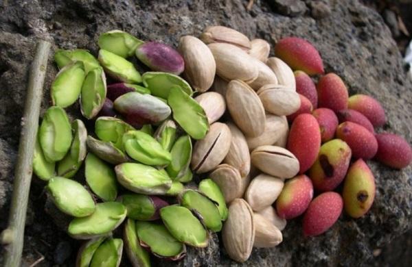 Зеленые плоды ореха