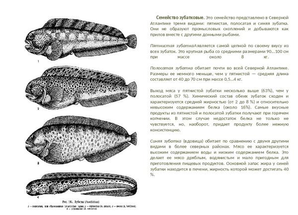 Зубатка: польза и вред рыбы